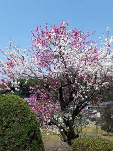大の葬祭 想いのメモ帳(みえ)2018/4/3