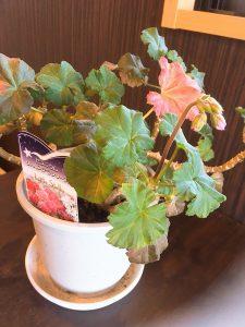 大の葬祭 想いのメモ帳(みえ)2018/4/15