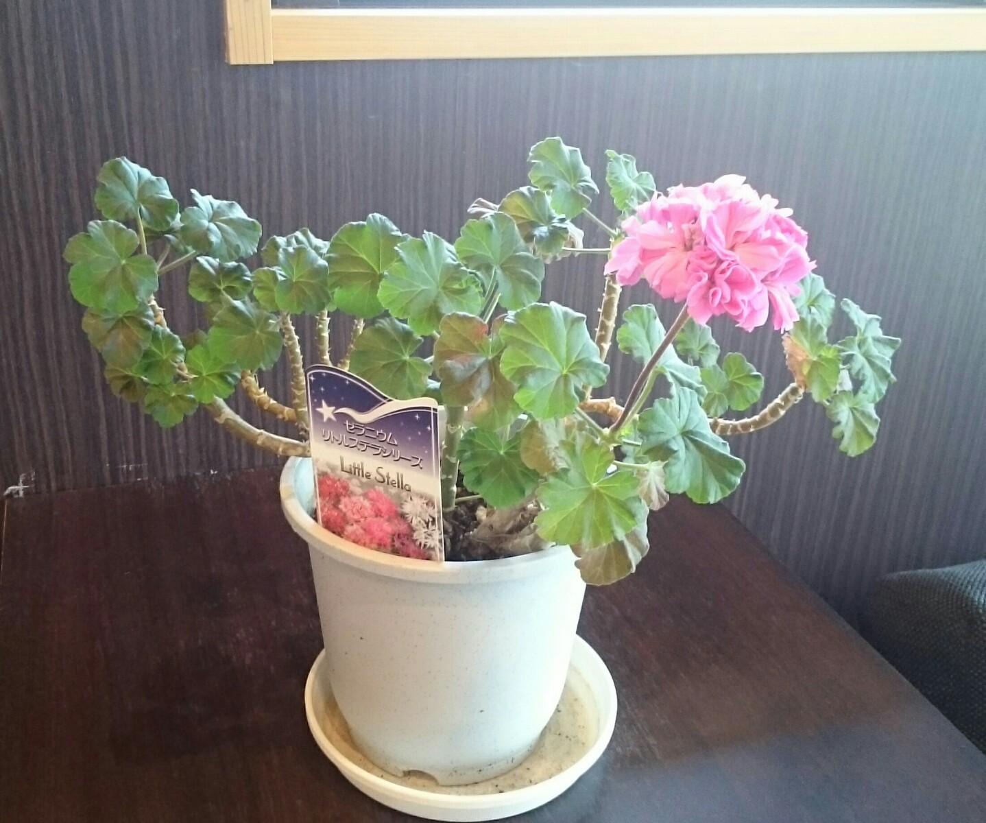大の葬祭 想いのメモ帳(みえ)2018/5/3