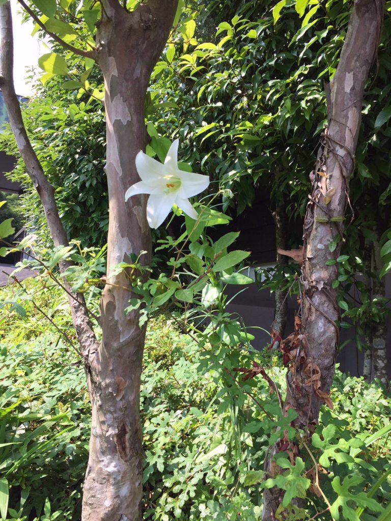 想いのメモ帳(うすき)2018/8/8