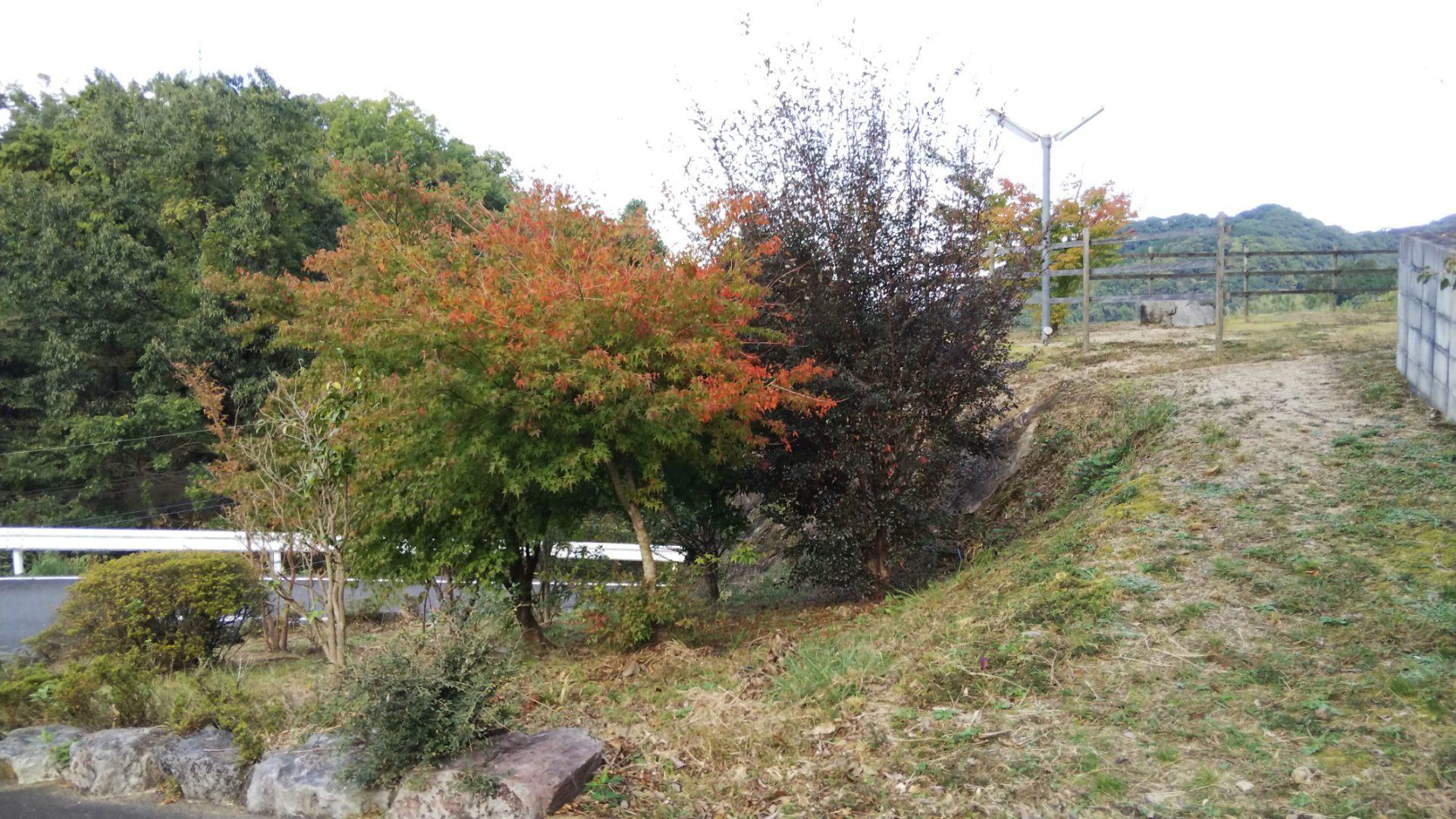 想いのメモ帳(うすき)2018/11/5