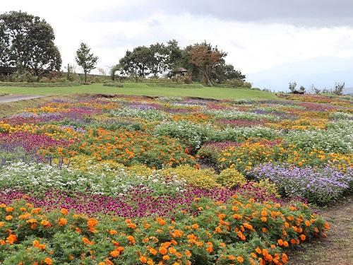 バスツアー 花公園2