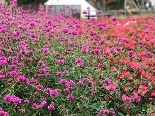 バスツアー花公園3